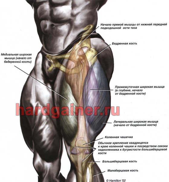 мышцы галифе ног в картинках дорогие