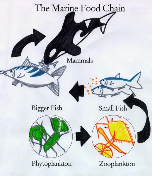 Схема питания на море