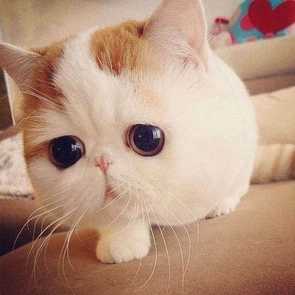 картинки пород кошек с названием породы