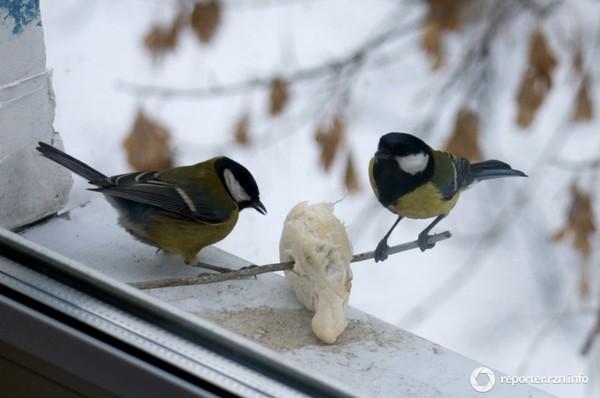 Ответы@mail.ru: по балкону скачут птички, жёлто- синие синич.