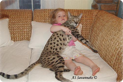 саванна кошка цена и фото