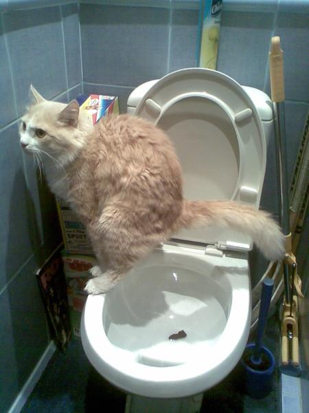 Кот писит