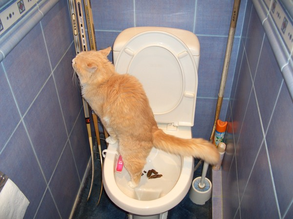 Хожу в туалет по большому как зеленый