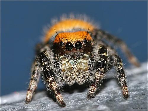 Форма паука 9