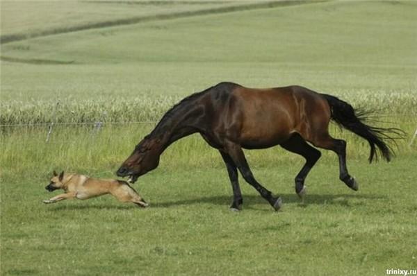 Собаки Дворняжки Фото Дворняжка Щенок