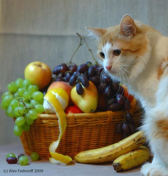 картинки котики с фруктами межкомнатные двери