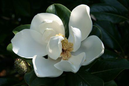 prostitutki-sochi-magnoliya