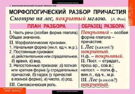 морфологический разбор слова существительного образец - фото 4