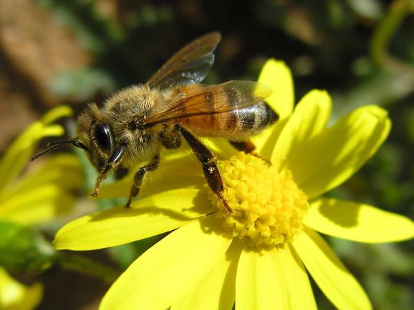 картинки растений и пчел пример симбиоза так бетонные заводы
