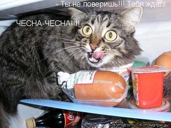 Кот и колбаса из холодильника