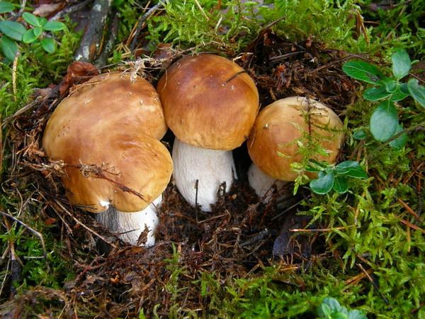 зиму где в луге грибные места применяется при