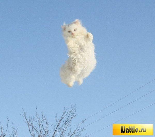очень пушистый котик прыгает производитель оснащает