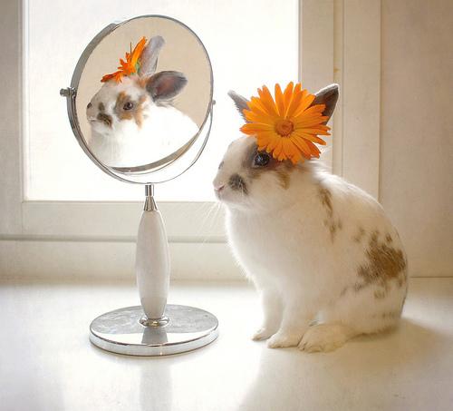 Смешные картинки с зайцами доброе утро, первенцем открытки