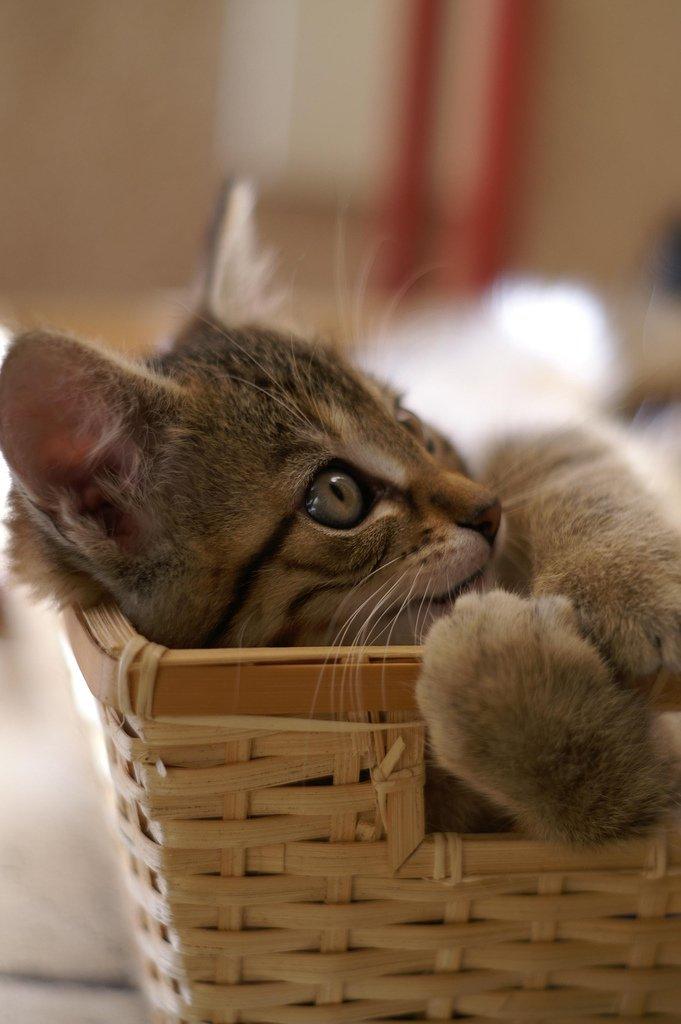 Кошки обладают удивительной способностью находить дорогу домой