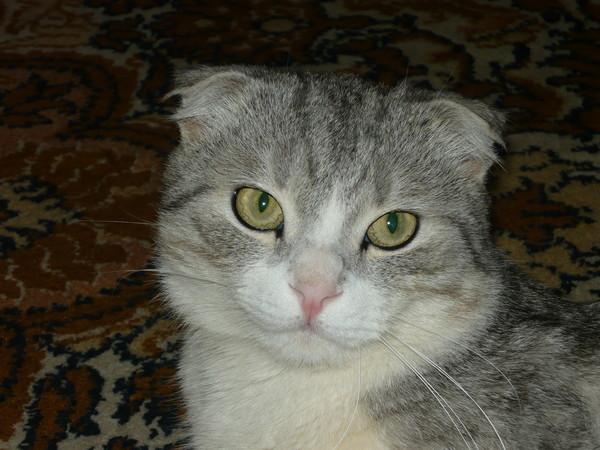 можно ли скрещивать кошек брата и сестру британцев термобелье является…