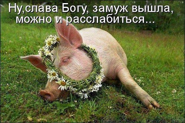 Днем рождения, картинки со свинками прикольные с надписями