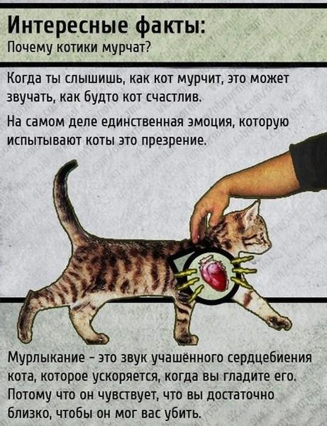 https://otvet.imgsmail.ru/download/baa46606a4bbb2ab47c74c5f2d8f9d29_i-953.jpg