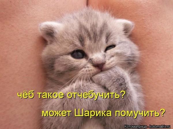 https://otvet.imgsmail.ru/download/bc4afffbc119359f4282e4f88201dfd1_i-121.jpg