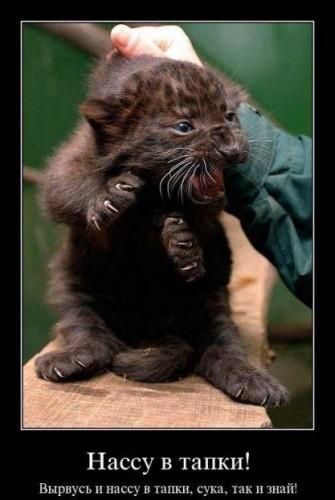 Нельзя тянуть кота за хвост