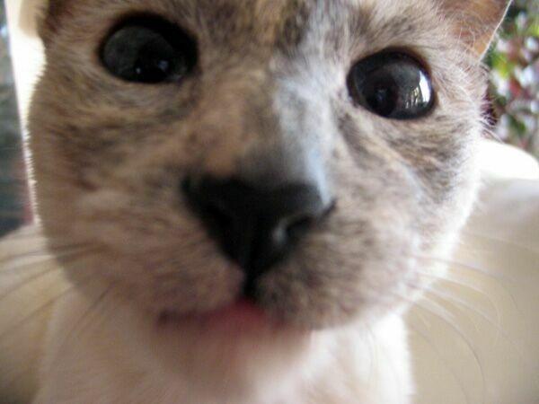 Нос у кота горячий и мокрый