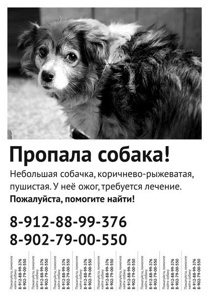 Подать объявление о пропаже собак дать объявление о сдачи жилья летом для отдыхающих бесплатно ейск