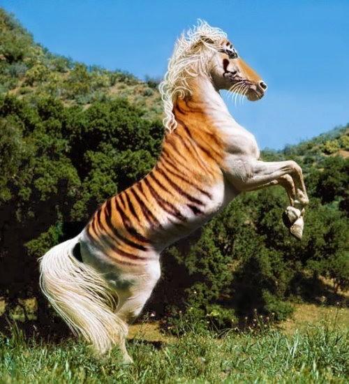 тигр на лошади фото