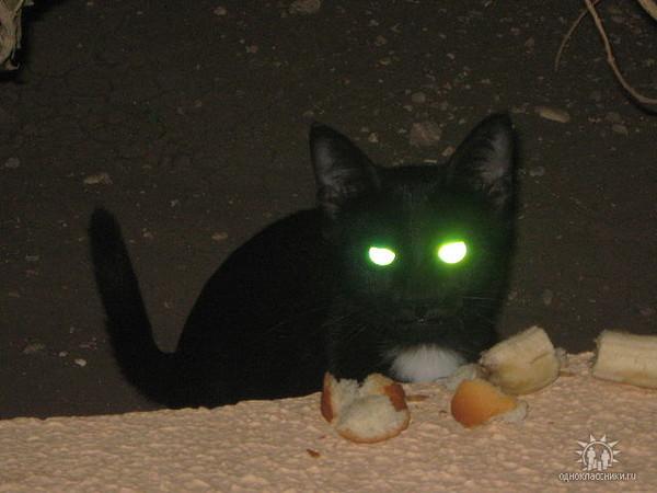 глаза кошки светятся в темноте картинки можете заказать