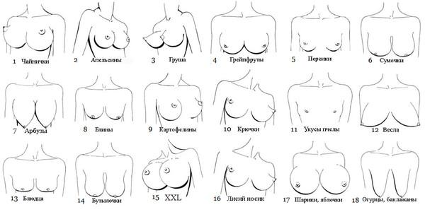 klassifikatsiya-zhenskih-sisek-foto-ebut-chuzhih-nevest-ok-porno