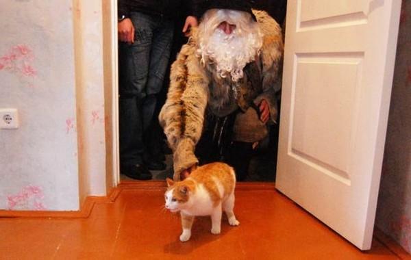 Как впускать кота в дом