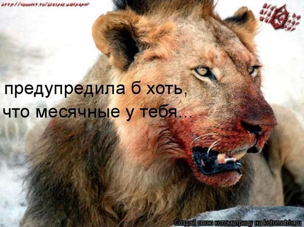 Download секс в клетке с львом
