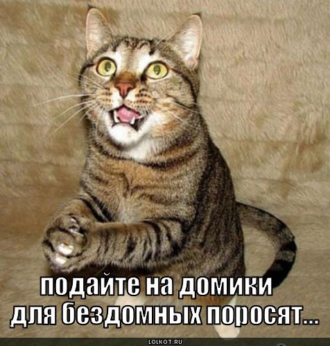 Побил кота что делать