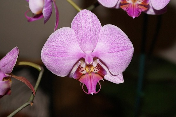 Сексуальный цветок