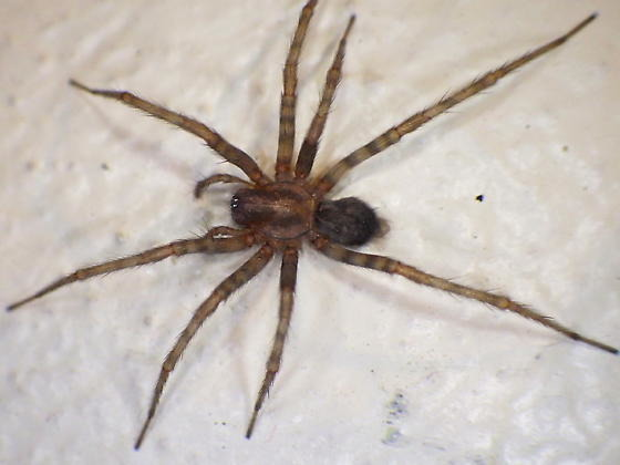 как узнать по фото паука тёплое время года