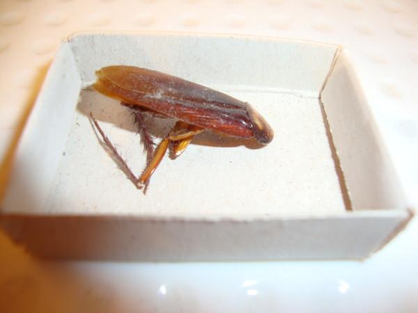 тараканы на кипре фото туристов что тело