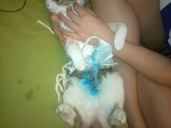 сериалы, кошка слабая после стерилизации Шошка