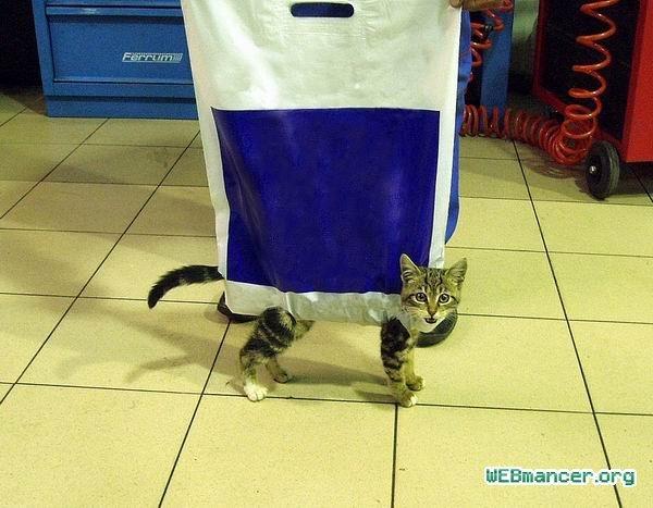 Кот в переноске прикол