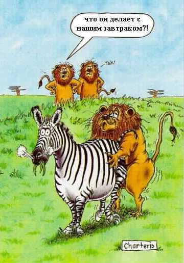 Левы занимаютсья сексом