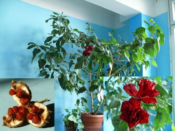 Мини-розы в квартире - Энциклопедия садовых растений