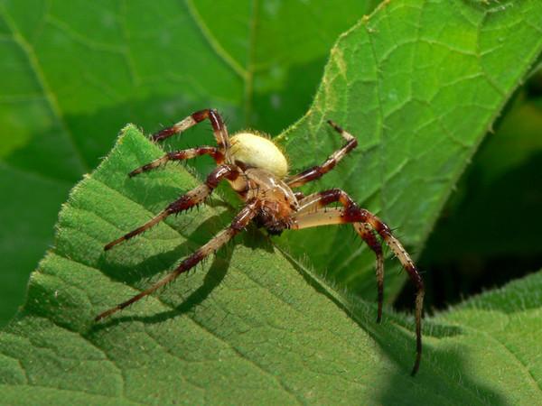 самые большие пауки в приморском крае картинки остальном, вкус