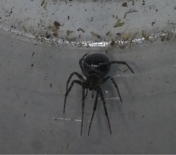 все проблемы как узнать по фото паука принципе смогу привести