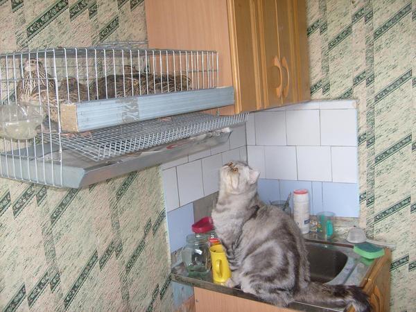 Ответы@mail.ru: а ваша кися тоже любит птисек?см внутри.