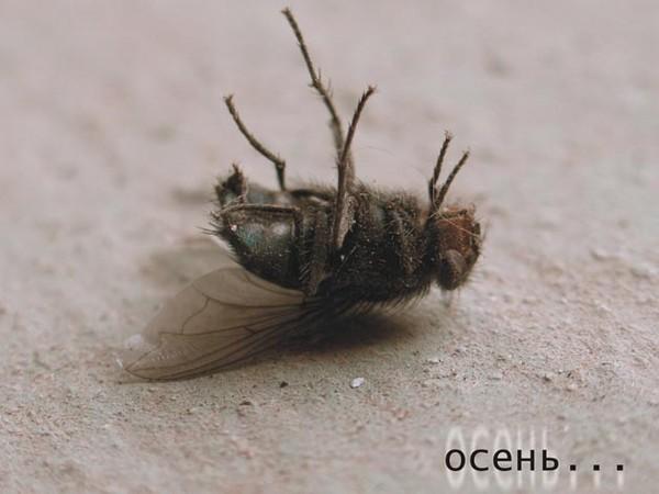 сонная муха фото столе были