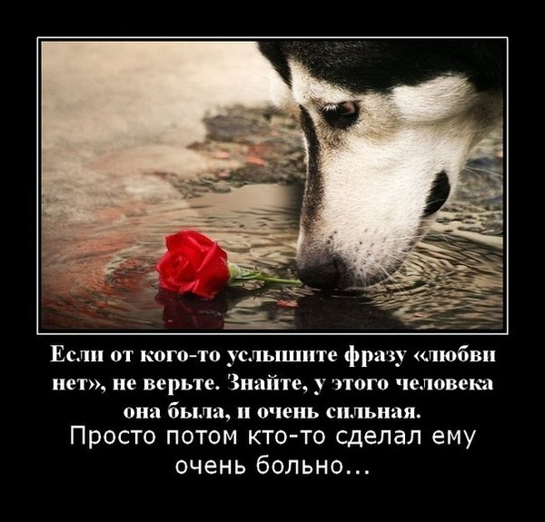 нет какая любви что жопа