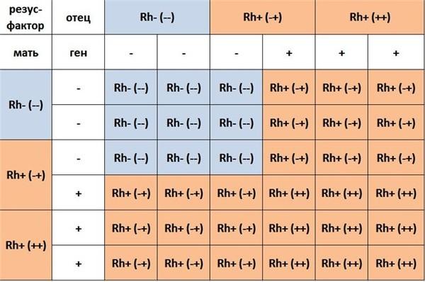 Анализ крови на резус фактор определение группы крови