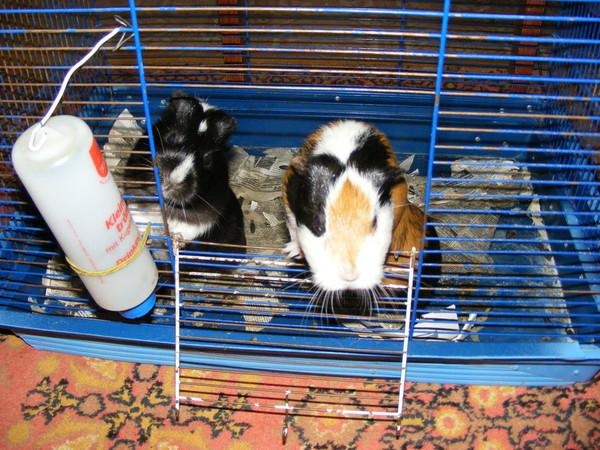 как правильно установить поилку для кролика