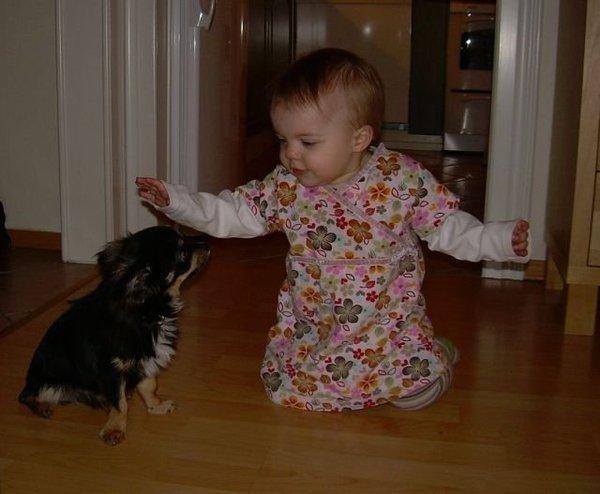 Фото домашних животных до полтора года