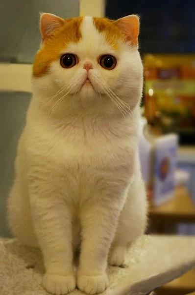 Фото кот няшный
