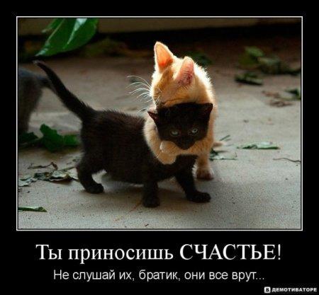 Рыжий кот перебежал дорогу к чему