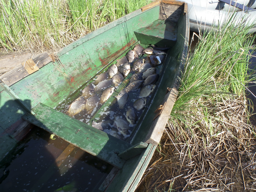 прикормка для карповых рыб