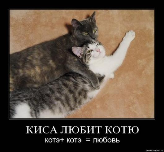 Картинка твоя котя